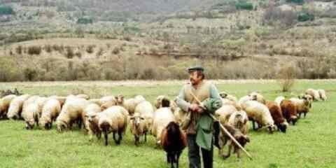 Κατανομή βοσκήσιμων εκτάσεων έτους 2017, για τους κτηνοτρόφους, από τον δήμο Πλατανιά