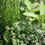 Από ανεξέλεγκτη συλλογή και βόσκηση κινδυνεύουν τα αρωματικά φυτά στα Χανιά