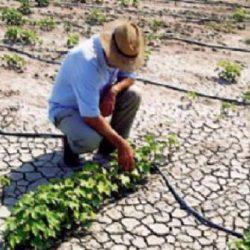 Οι αγρότες της Κρήτης θέλουν να αποζημιώνεται και η ξηρασία