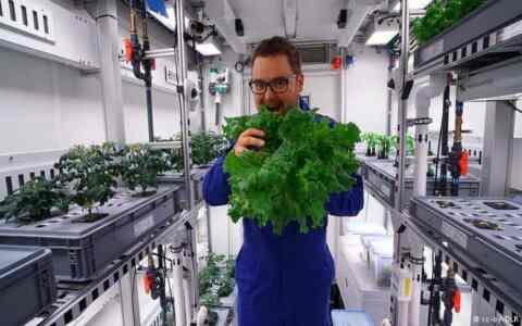 Καλλιέργησαν Λαχανικά χωρίς χώμα και φώς