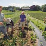 Ο δήμος Πλατανιά ζητά να αλλάξει το πλαίσιο αποζημίωσης του φυτικού κεφαλαίου