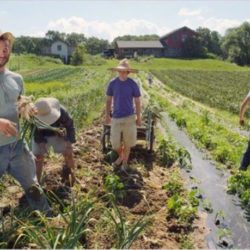 Υποχρεωτική η υποβολή της Ενιαίας Αίτησης Ενίσχυσης για χορήγηση βεβαίωσης Μητρώου Αγροτών