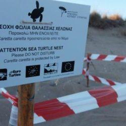 Μέτρα για την προστασία της ωοτοκίας της Caretta-Caretta στον Βόρειο Άξονα