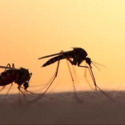 Στους έξι οι νεκροί από τον ιό του Δυτικού Νείλου