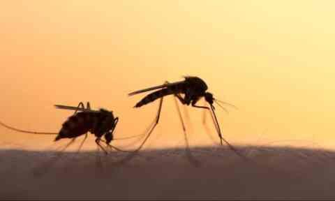 «Εισβολή» κουνουπιών στην Κρήτη. Με drone και αμφίβια οι ψεκασμοί