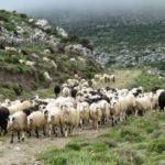 Αύξηση κατά 16 εκ. ευρώ για την Κρήτη στην Βιολογική κτηνοτροφία
