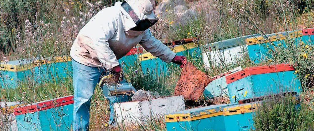 Διημερίδα για την μελισσοκομία στην Κρήτη, από τον Μελισσοκομικό σύλλογο Χανίων