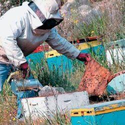 Τριήμερη εκπαίδευση μελισσοκομίας στα Χανιά