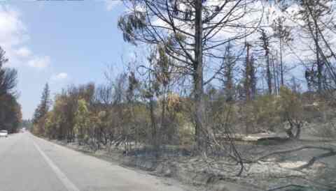 Σε συνεννόηση με το δασαρχείο η κοπή των καμένων δέντρων στον Αποκόρωνα