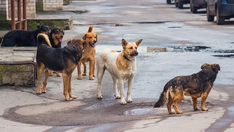 Ολοκληρώνεται η διαμόρφωση του νομικού πλαισίου για τα αδέσποτα ζώα