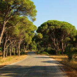 Τη δημιουργία Συμβουλίου Ιδιοκτησίας Δασών Κρήτης ζητούν επτά βουλευτές του ΣΥΡΙΖΑ