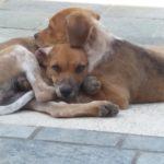 Σε εξέλιξη ο πρωτότυπος διαγωνισμός του Δήμου Χανίων για τα αδέσποτα ζώα