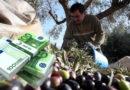 Πιστώθηκε το 70% της Ενιαίας Ενίσχυσης 2020. Σχεδόν 700 εκατ. ευρώ σε 540.000 αγρότες