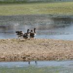 «Γιορτή των Πουλιών» την Κυριακή στη λίμνη της Αγιάς