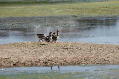 Την Κυριακή η Γιορτή των Πουλιών στη Λίμνη της Αγιάς