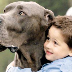 Παιδιά που συμβιώνουν με ζώα «θωρακίζονται» απέναντι στις αλλεργίες