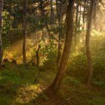 Το μήνυμα της διεύθυνσης δασών Χανίων για την παγκόσμια ημέρα δασοπονίας