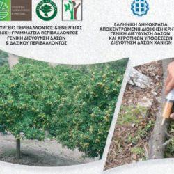 Ημερίδα για τις απειλές της καστανιάς και του πλατάνου, από την διεύθυνση δασών Χανίων