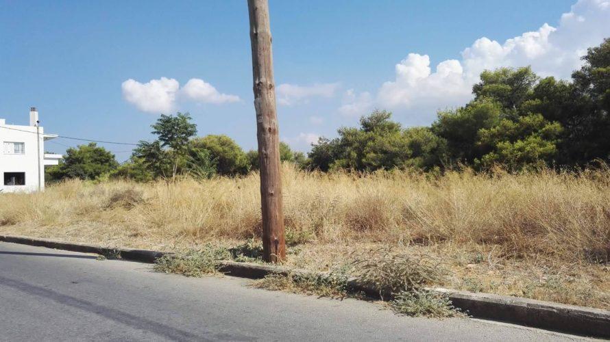 Σύσταση του δήμου Χανίων να καθαρίσουν οι δημότες τα οικόπεδά τους από τα ξερά χόρτα