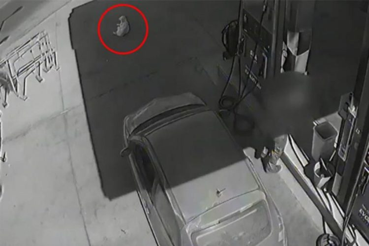 Οργή στους Χανιώτες από βίντεο με το κτύπημα και την εγκατάλειψη σκύλου σε βενζινάδικο