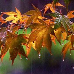 Βροχερός ο καιρός σήμερα και αύριο. Βελτίωση από Τετάρτη
