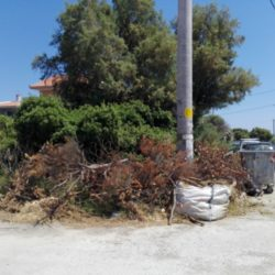 Καλούνται οι δημότες των Χανίων να κλαδέψουν τα δέντρα που εμποδίζουν την κυκλοφορία