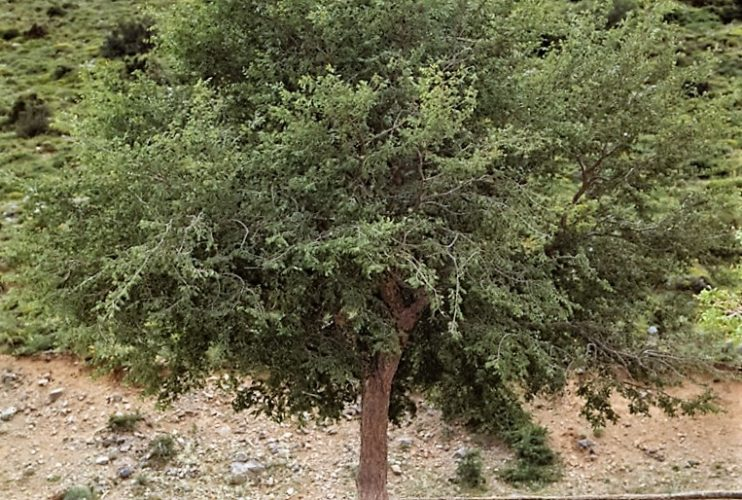 Στο επίκεντρο η προστασία της Αμπελιτσιάς στην Κρήτη