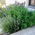 Ημερίδα για τα αρωματικά φυτά στο Πνευματικό Κέντρο