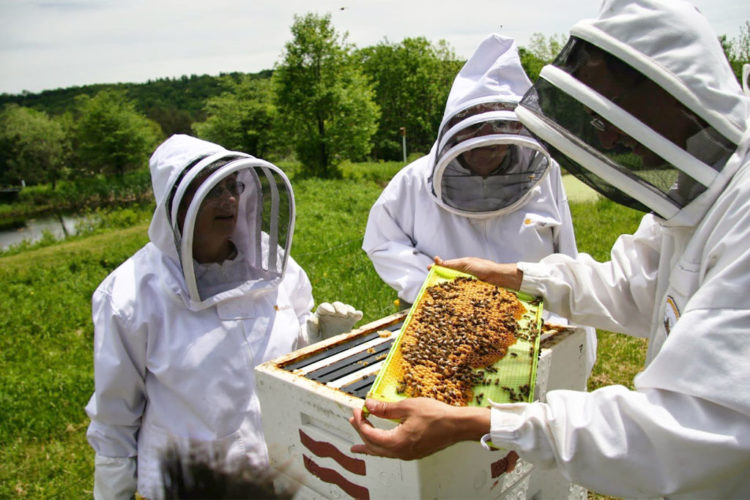 Στις 12 Φεβρουαρίου η ετήσια συνέλευση του μελισσοκομικού συλλόγου Χανίων