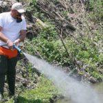 Κρήτη | Aρχίζουν άμεσα οι ψεκασμοί καταπολέμησης της εκκόλαψης κουνουπιών