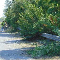 Εντός 10 ημερών η κοπή κλαδιών που εμποδίζουν την κυκλοφορία οχημάτων στον δήμο Πλατανιά