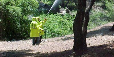 Οι περιοχές του δήμου Πλατανιά που γίνονται σήμερα ψεκασμοί για τον δάκο
