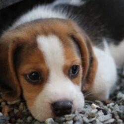 Το ευχαριστήριο ενός Χανιώτη προς τον δήμο Χανίων, για ένα πανέμορφο σκυλάκι