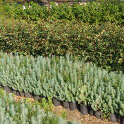 Ξεκινά η χορήγηση φυτών από το Δασικό Φυτώριο Χανίων