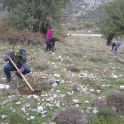 Δήμος Πλατανιά: Τιμα την 75η επέτειο ίδρυσης του ΟΗΕ με φύτευση 75 δενδρυλλίων αμπελιτσιάς στον Ομαλό