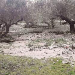 Αποζημιώσεις των επαγγελματιών αγροτών που επλήγησαν από την θεομηνία και δεν καλύπτονται από τον ΕΛΓΑ
