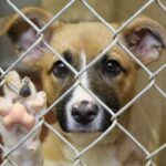 Χρήματα σε Χανιά και Πλατανιά για τα καταφύγια αδέσποτων ζώων