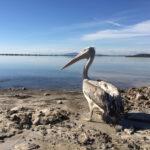 """Δεκάδες πτηνά απέστειλε για περίθαλψη στην """"Άνιμα"""" η Διεύθυνση Δασών Χανίων"""