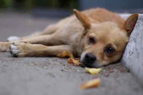Αξιοσημείωτη συμμετοχή στην διαβούλευση του Ν/Σ για τα ζώα συντροφιάς