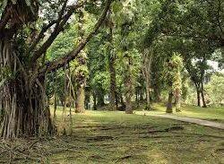 Σχεδόν το ένα στα τρία είδη δέντρων της Γης κινδυνεύουν με εξαφάνιση